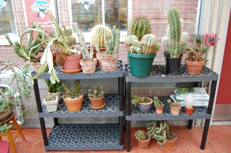 A treasure trove of cactus