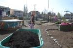 Cedar Grove compost