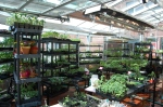 A Green Warehouse of plants to donate