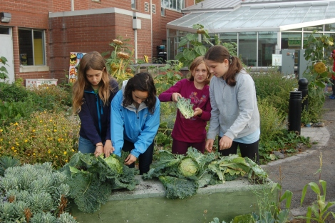 Middle schoolers harvest a couple cabbages before liftoff