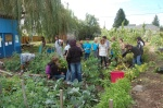 The Hillman City p-patch foodbank plot