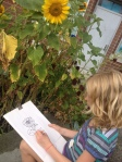 Sunflower observation