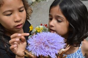 Artichoke Flower Fascination