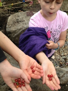 goumi berries!