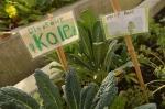 Dino Kale!