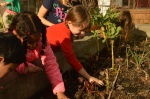 Planting kale seeds outside