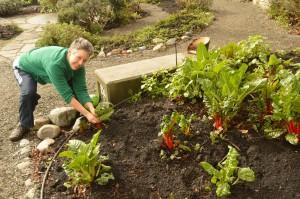 Chef Tamara Guyton harvests greens
