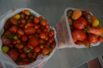 It's officially the year of the tomatoes