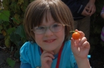 The delight of a cherry tomato