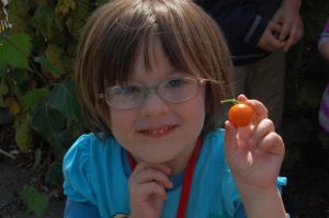 The delight of a cherry tomato